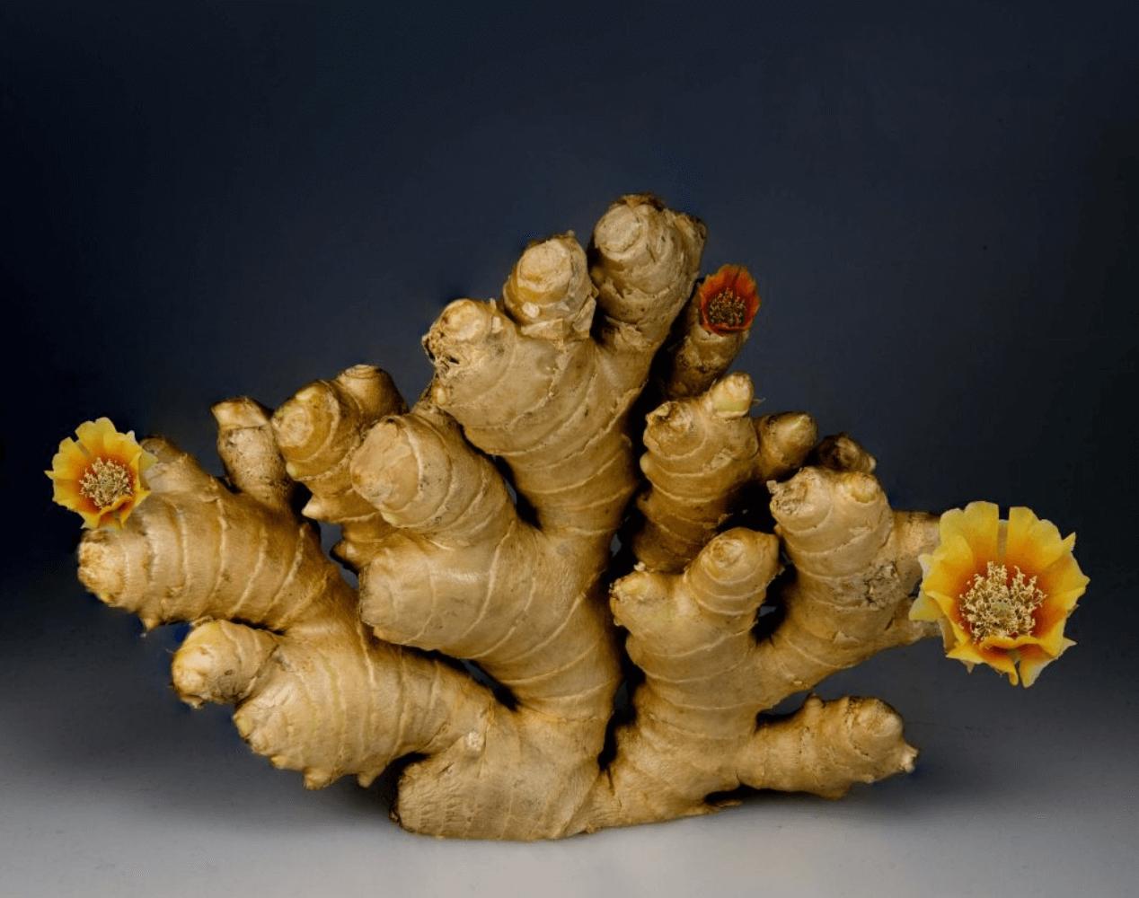 Ginger diet